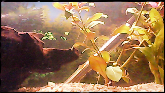 Fishcam Raspberry Webcam